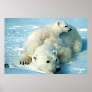 Oso polar e impresión de Cub Impresiones