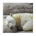 Oso polar el dormir azulejo cerámica