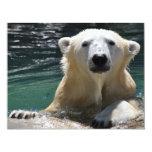 Oso polar empapado anuncios personalizados