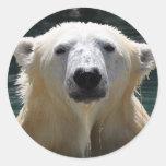 Oso polar empapado etiquetas redondas