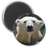 Oso polar empapado imán de nevera