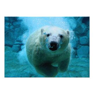 Oso polar en agua anuncio