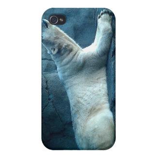 Oso polar en caso de la mota del rezo iPhone 4 cárcasa