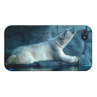 Oso polar en caso de la mota del rezo iPhone 4 protectores