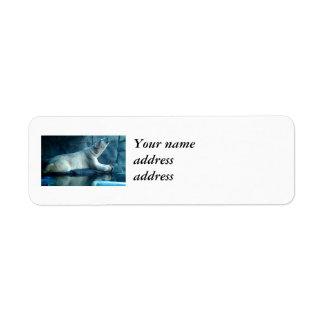 Oso polar en etiquetas del remite del rezo etiquetas de remite