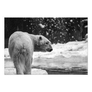 Oso polar en la nieve fotografía
