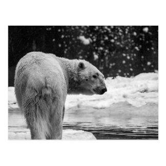 Oso polar en la nieve postal