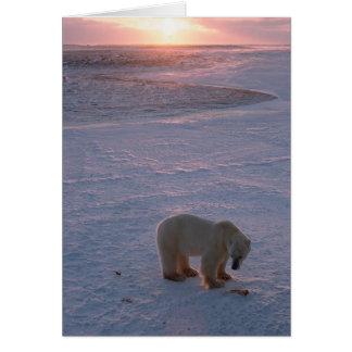 Oso polar en la puesta del sol tarjeta de felicitación
