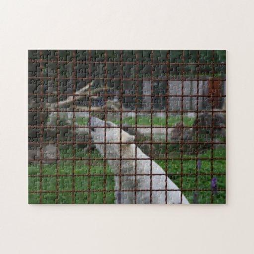 Oso polar enjaulado puzzles con fotos
