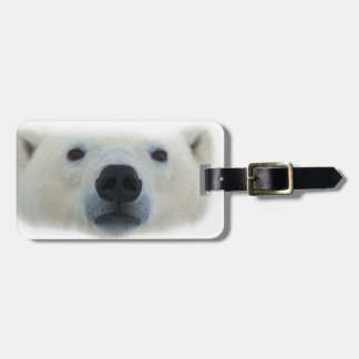 Oso polar etiquetas bolsas