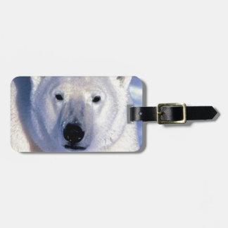 Oso polar etiquetas de maletas