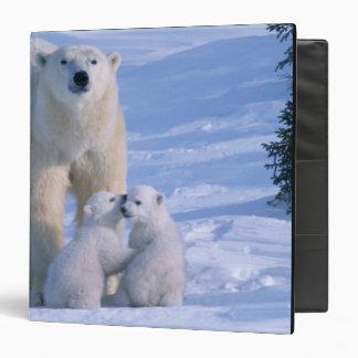 """Oso polar femenino que se coloca con 2 Cubs en ell Carpeta 1 1/2"""""""