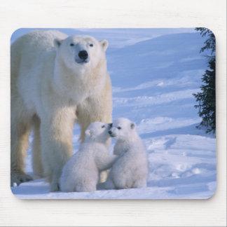 Oso polar femenino que se coloca con 2 Cubs en ell Alfombrillas De Ratones
