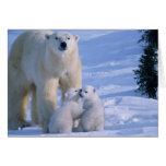 Oso polar femenino que se coloca con 2 Cubs en ell Felicitacion