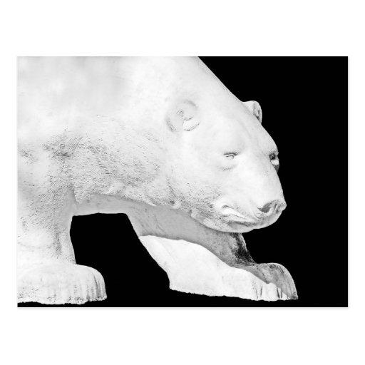 Oso polar, fondo negro (5) tarjetas postales