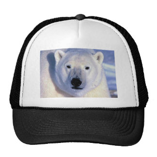 Oso polar gorras de camionero