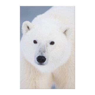 Oso polar impresión en lienzo