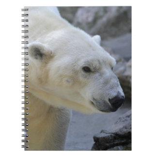 Oso polar libretas