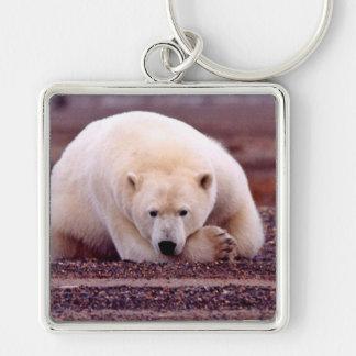 Oso polar llavero cuadrado plateado
