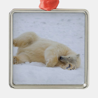oso polar maritimus del Ursus balanceo del cacho Ornaments Para Arbol De Navidad