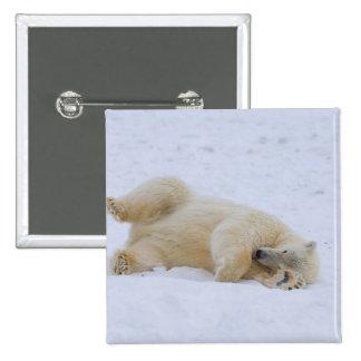 oso polar, maritimus del Ursus, balanceo del cacho Pin Cuadrada 5 Cm