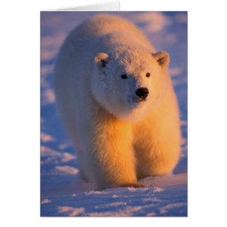 oso polar, maritimus del Ursus, cachorro en el paq Tarjeta De Felicitación