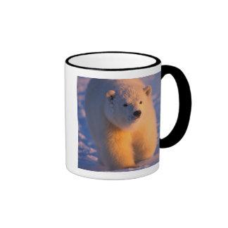 oso polar, maritimus del Ursus, cachorro en el paq Taza De Café