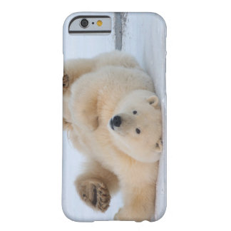 oso polar, maritimus del Ursus, cachorro que rueda Funda De iPhone 6 Barely There