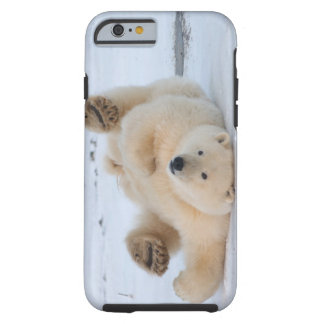oso polar, maritimus del Ursus, cachorro que rueda Funda De iPhone 6 Tough