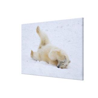 oso polar maritimus del Ursus cachorro que rueda Lona Envuelta Para Galerías