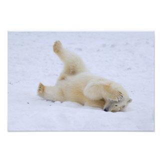 oso polar, maritimus del Ursus, cachorro que rueda Fotografia