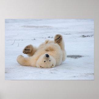 oso polar, maritimus del Ursus, cachorro que rueda Póster