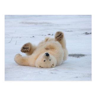 oso polar maritimus del Ursus cachorro que rueda Postal