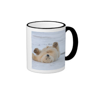 oso polar, maritimus del Ursus, cachorro que rueda Tazas De Café