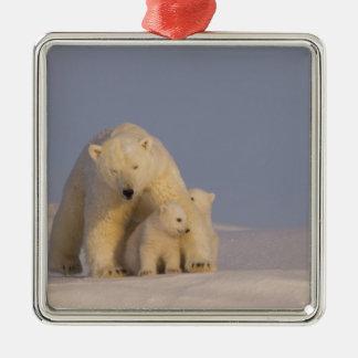 oso polar maritimus del Ursus cerda con 2 recién Ornaments Para Arbol De Navidad