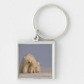 oso polar, maritimus del Ursus, cerda con 2 recién Llavero Cuadrado Plateado