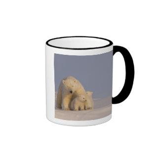oso polar, maritimus del Ursus, cerda con 2 recién Tazas De Café