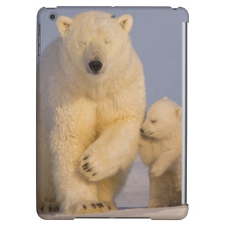 oso polar, maritimus del Ursus, cerda con 3 recién