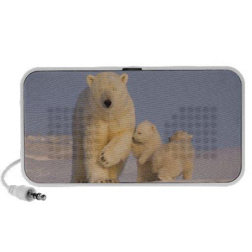 oso polar, maritimus del Ursus, cerda con 3 recién Mp3 Altavoz