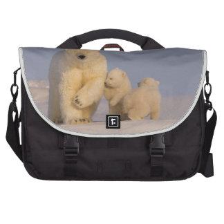 oso polar maritimus del Ursus cerda con 3 recién Bolsas Para Ordenador