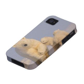 oso polar maritimus del Ursus cerda con 3 recién