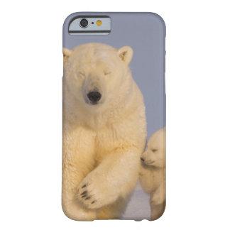 oso polar, maritimus del Ursus, cerda con 3 recién Funda De iPhone 6 Barely There