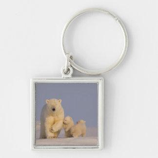 oso polar, maritimus del Ursus, cerda con 3 recién Llavero Cuadrado Plateado