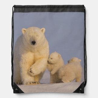 oso polar maritimus del Ursus cerda con 3 recién Mochila
