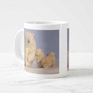 oso polar, maritimus del Ursus, cerda con 3 recién Taza Grande
