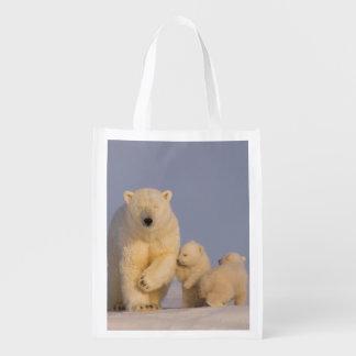 oso polar maritimus del Ursus cerda con 3 recién Bolsas De La Compra
