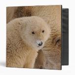 oso polar, maritimus del Ursus, cerda con el cacho