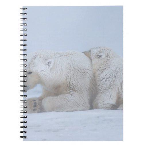 oso polar, maritimus del Ursus, cerda con el cacho Libro De Apuntes