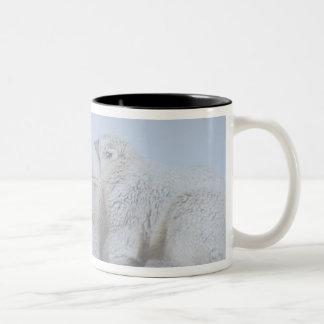 oso polar, maritimus del Ursus, cerda con el cacho Tazas De Café