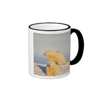 oso polar, maritimus del Ursus, cerda con el cacho Taza